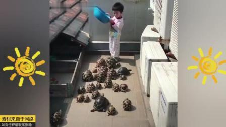 养一群乌龟是什么感觉, 发生在动物身上的搞笑傻缺视频