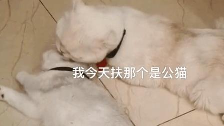 会说话的猫: 瓜子吃醋了~