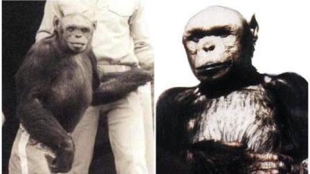 真有人类和猩猩混种? 美国科学家: 百年前曾交配诞生过