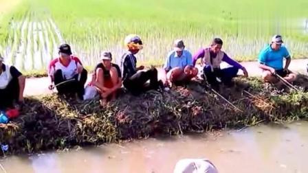 钓鱼: 稻田边的水沟里举行钓鱼比赛, 看谁钓得多
