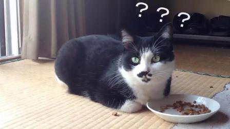 监控拍下经历地震的猫, 一脸懵逼的猫: 刚刚发生了啥?