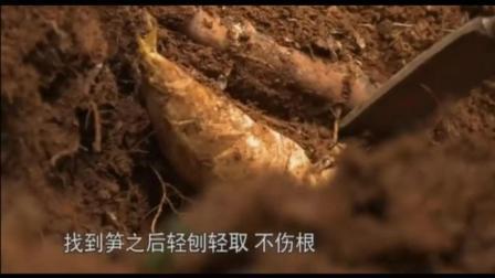 舌尖上的中国竹笋篇: 酸笋配螺狮粉是我最喜欢的
