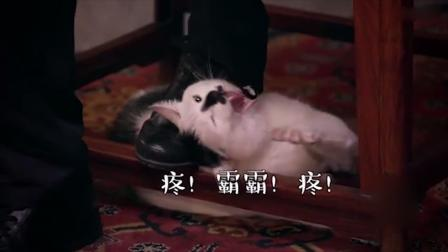 马未都把猫踩在脚下蹂躏,观复猫一脸委屈:疼!霸霸!疼!