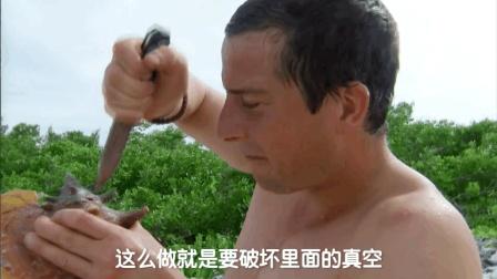 贝爷在荒岛教你开海螺, 撬石鳖, 饱含蛋白质的海鲜大餐超美味!