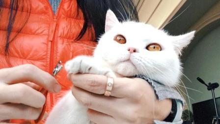 猫咪不愿意剪指甲殊死反抗, 剪到最后却要睡着了, 真是好乖啊