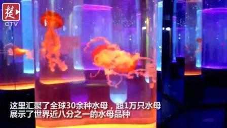 约吗? 武汉海洋萌宠乐园迎客, 汇集上万只水母