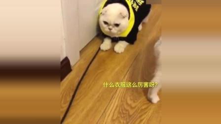 猫咪搞笑神配音: 刘二豆无忧无虑的生活, 终于知道豆妈的重要了!