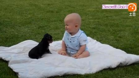 小狗第一次与人类婴儿接触会怎样? 下一幕让人哭笑不得