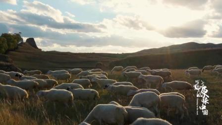 6右玉羊肉