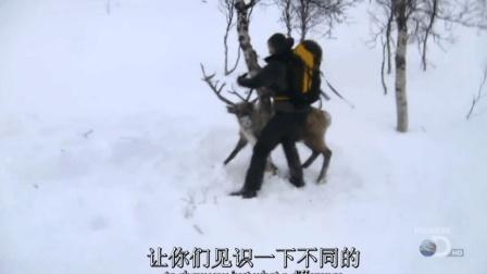 贝爷设陷阱抓到大驯鹿, 这样太狠太野蛮了!