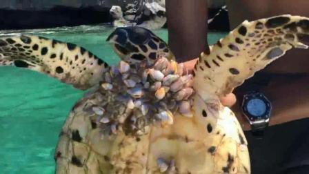 真吓人, 这乌龟太可怜了, 看到头皮发麻