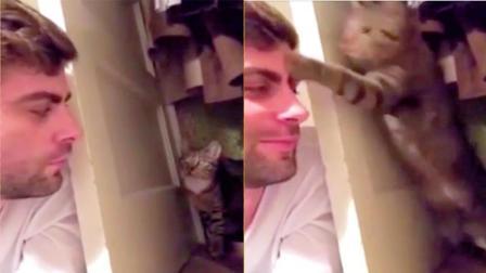 小猫和主人相互监视被发现, 尴尬了!