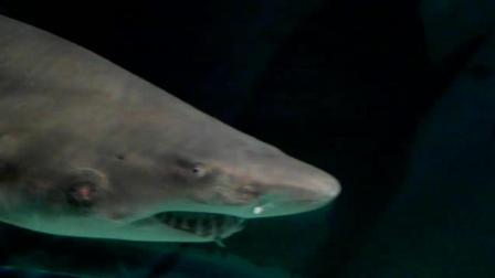 2018春晚珠海分会场珠海长隆海洋世界海底世界大白鲨虎鲨大鲨鱼