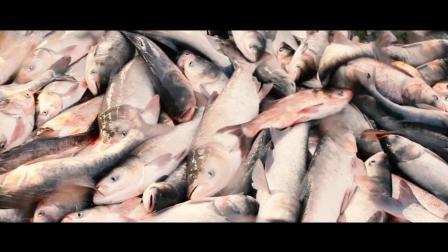舌尖上的中国 第三季 《舌尖上的中国》精彩回顾::查干湖边壮观的全鱼宴