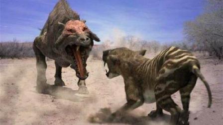 史前四大巨猪, 战斗力完爆剑齿虎, 可与恐龙战斗!