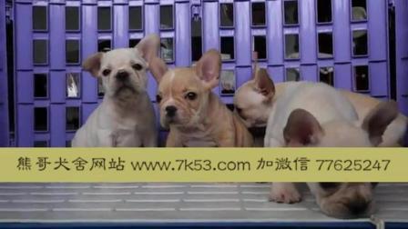 一只斗牛犬要多少钱 哪里卖纯种斗牛犬 斗牛犬多少钱一只大狗