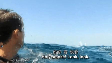 贝爷在尖叫, 在喊妈妈! 近距离遭遇大鲸鱼!