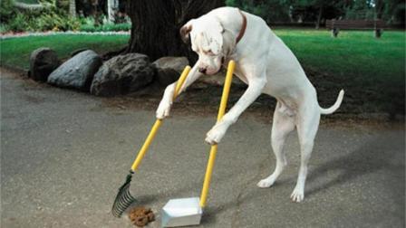"""科学家研究为什么""""狗改不了吃屎"""", 答案很搞笑!"""