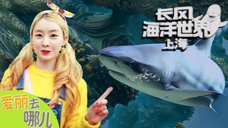 [爱丽去哪儿] 上海长风海洋世界   爱丽去哪儿