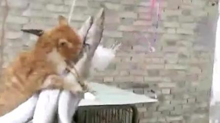 一只偷吃的猫被逮个正着, 这技术神了