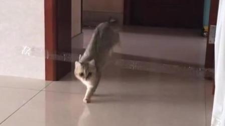 猫: 咦, 我好像跨过了一个什么东西?