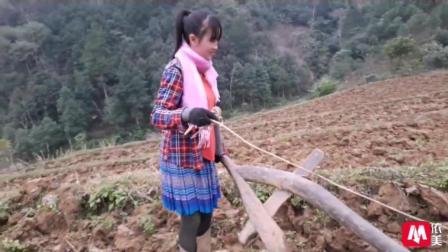 越南苗族农村美女下地耕田 女汉子气质让男人们汗颜
