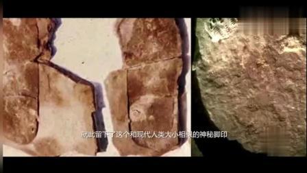 科学家发现5亿年前化石, 里面存在人类脚印, 是穿越还是外星人?