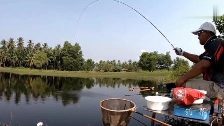 钓鱼: 浮漂断断续续点动, 突然一个黑漂, 鱼竿被拉弯!