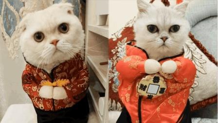网红猫咪二豆和瓜子给大家拜年了, 太可爱了!