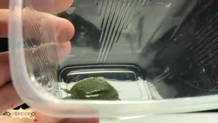 手工达人教你用随处可见的材料制作乌龟水族箱! 太牛了!
