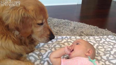 小婴儿对狗狗说话, 狗狗在旁边用慈爱的目光看着宝宝