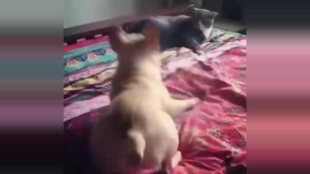 有趣的灵魂万里挑一, 犯贱的狗子千篇一律, 就服那只被猫扇一巴掌的