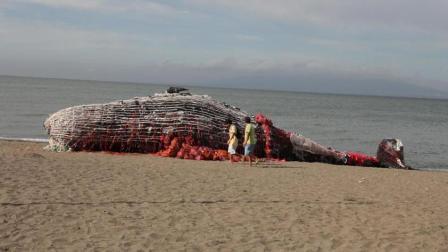 海边出现一头搁浅的鲸鱼, 所有走近的人都为之深思, 什么原因?
