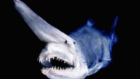海洋究竟有多深? 下潜到海底1000米后, 将出现人类未知的恐怖生物