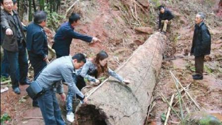 工人施工大呼挖到乌木了, 接着挖下去不敢挖, 考古队赶到吃惊!