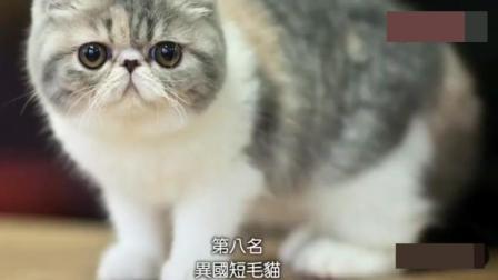 最适合家养的十大猫咪, 布偶猫小天使居然才排第五?