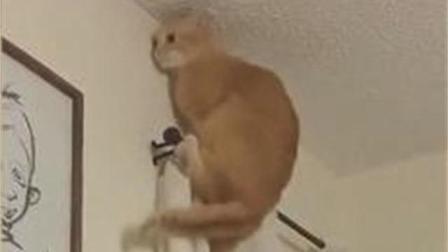 猫咪搞笑视频精选, 有你爱的吗?