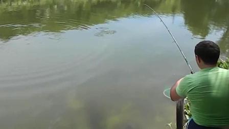 钓鱼: 大鱼的最后挣扎, 用去了所有的力气!