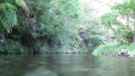 7天造景 环带黄瓜虾虎鱼