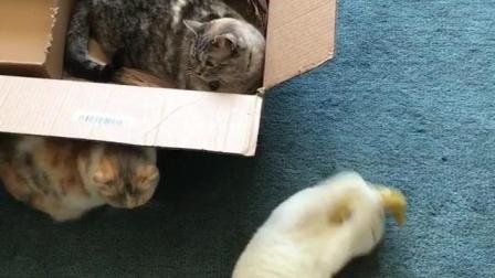 一个视频让你知道黑猫和白猫花猫有啥区别