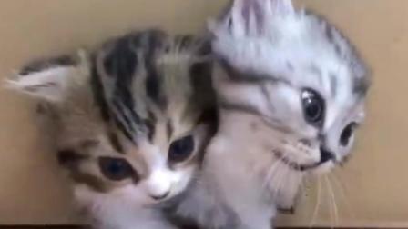 好想要一个这样的猫咪纸箱, 猫咪源源不断