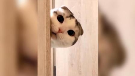 在门口摆了一盆水防止猫咪进房间, 看完觉得智商受到了侮辱!