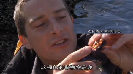 贝爷的故乡资源丰富啊, 海边随处可见大鱼, 紫海胆吃不完!