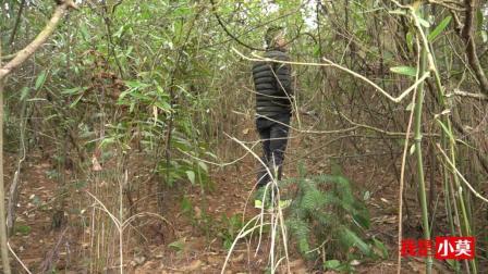 农村小伙去砍竹子, 三五成群, 你见过这样的吗?