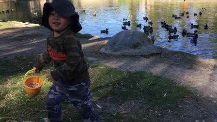 洛杉矶奇诺英语公园去喂鸭子