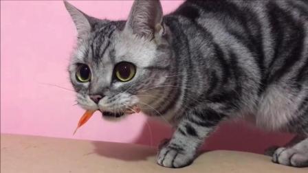猫: 我凭本事咬的鱼, 为什么要吐出来!