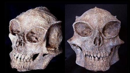 秘鲁洞穴发现诡异头盖骨, 疑似数万年前外星人遗骸!