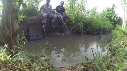 钓鱼: 印度阿三在这样的小水沟里 也能钓到不少大鱼!