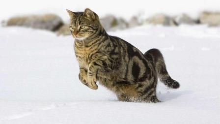 动物世界! 猫狗大战