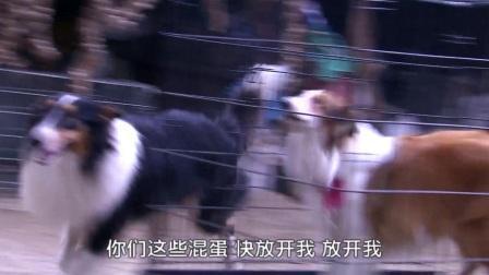 神犬找到伴侣激烈斗恶人,流浪恶犬良心发现帮助它们逃跑